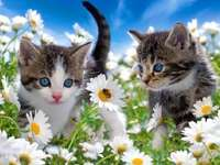 Katjes en madeliefjes.