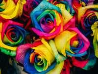 Kolorowe róże na Dzień Kobiet
