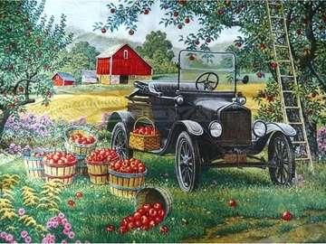 Autumn harvesting of apples. - Autumn harvesting of apples.