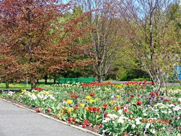 Ogród w Powsinie