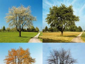 Schwieriges Rätsel - Landschaft. Baum. Schwieriges Rätsel