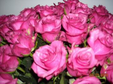 60 roses - roses that I got for my birthday