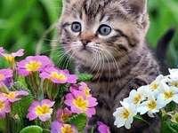 Kitty, lieve en lieve katten