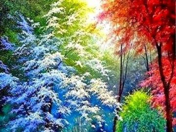 Bosque de colores - Bosque multicolor por día.