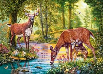 Deer. - Animals. Deer with family in the forest.