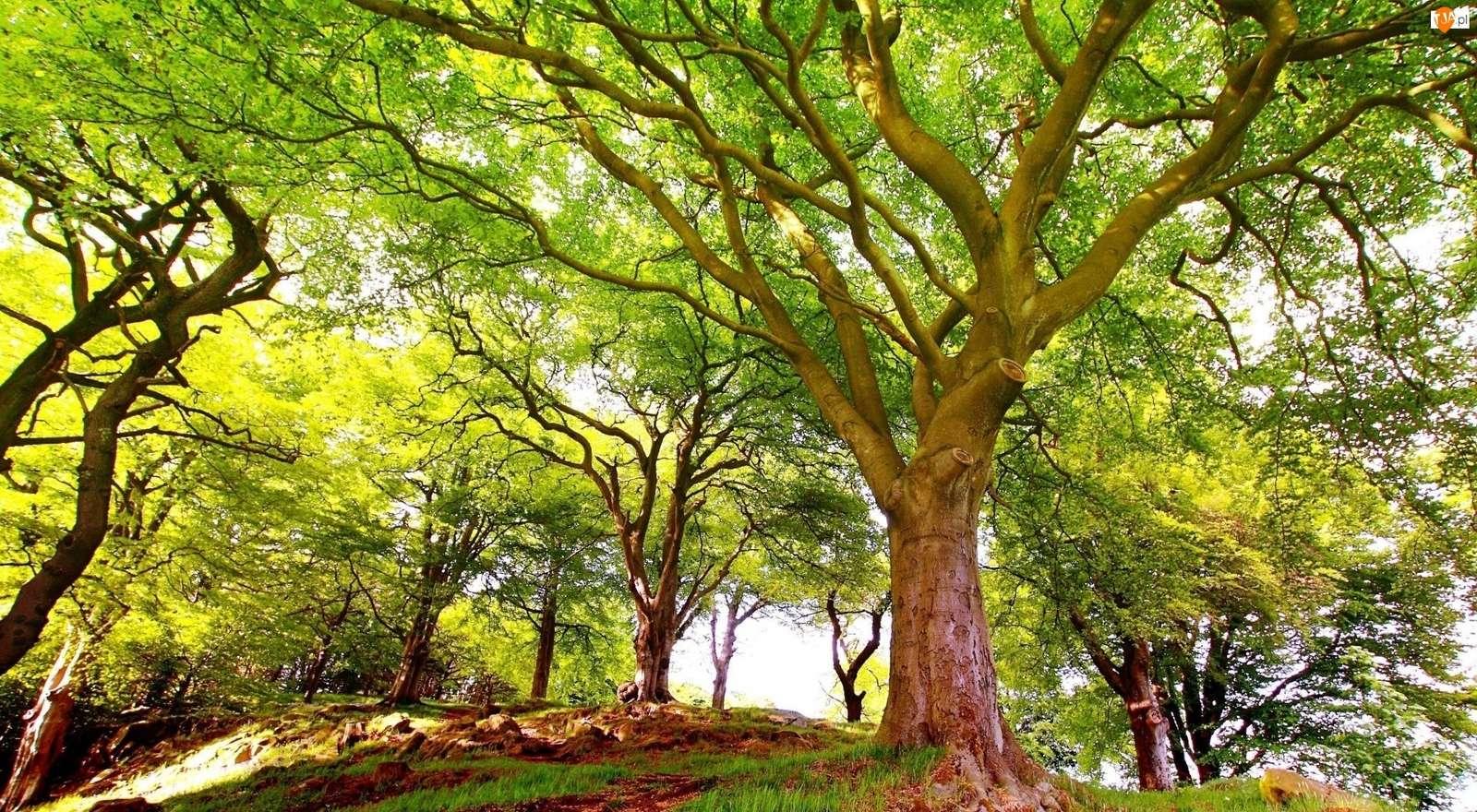 Heerlijk groene bomen - Het bos is iets moois, een heel rustgevende plek (13×13)