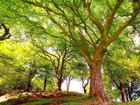 Árboles maravillosamente verde