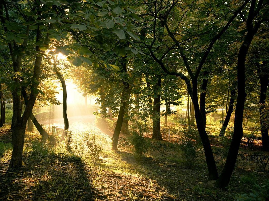 De zon breekt in het bos - Prachtig uitzicht, zonnestralen tussen de bomen (11×11)