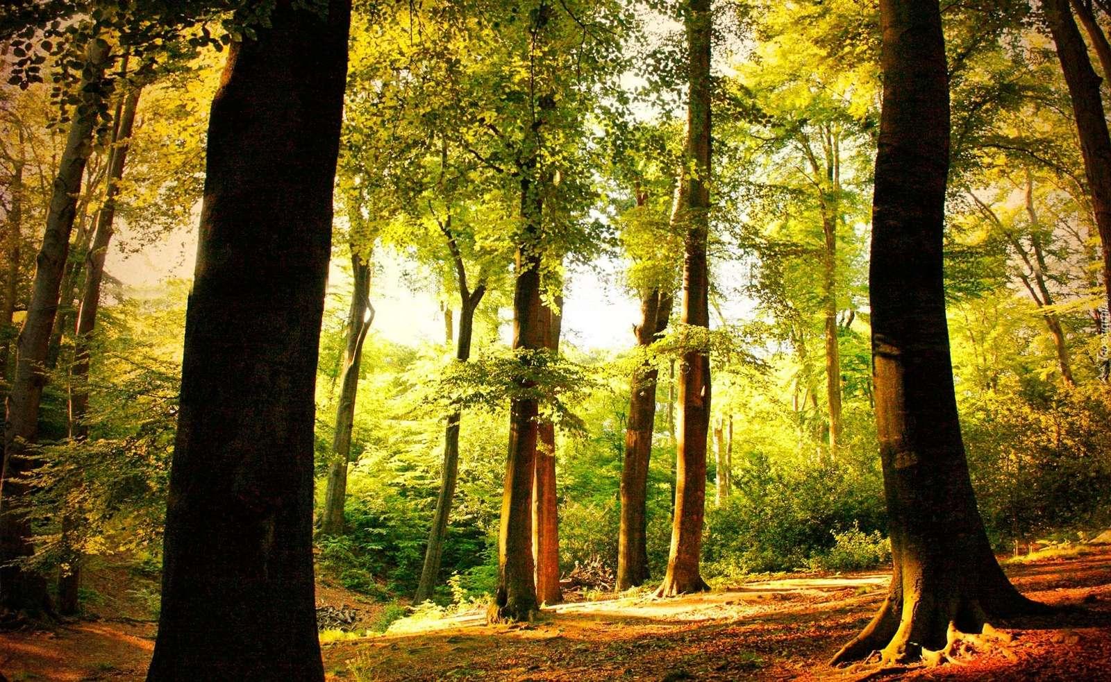 Het bos op een zonnige dag - Prachtig bos op een zonnige zomerdag (12×12)