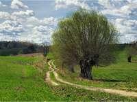 landskap - landskap, pil bredvid en grusväg