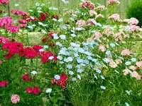Πολύχρωμα λουλούδια κήπου.