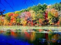 Приказна гледка, есенни листа