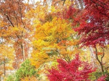 Se reposer à l'air frais - Se reposer à l'air frais. Dans les couronnes d'arbres colorés, feuilles d'automne c