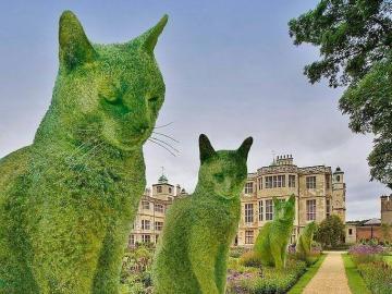 Aleja zielonych kotów - Aleja zielonych kotów .
