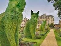 Laan van groene katten