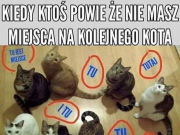 Miejsce na nowego kota - Nie masz miejsca na nowego kota ?