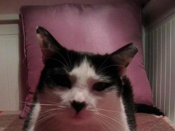 Nerz - Katzen Katze - Das ist Mink. Eigentlich war sie. Ich musste ihr Leiden verkürzen. Sie litt an Sarkom. Sie ging am