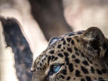 Fantastyczne zwierzęta - Fantastyczne zwierzęta i gdzie je znaleźć. To właśnie stworzyłem, baw się dobrze, odtwarzają