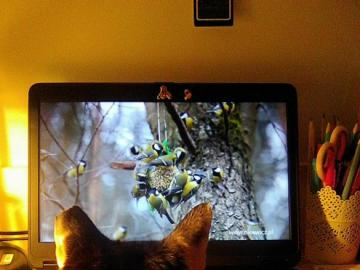 Katze und Titten - Sogar Katzen sind bereits vom Internet abhängig.
