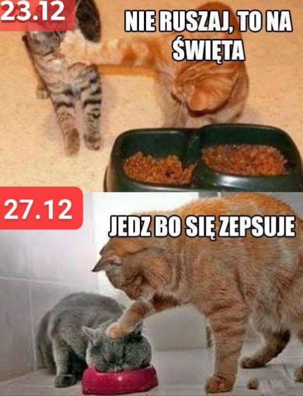 Katten voor en offers (8×8)