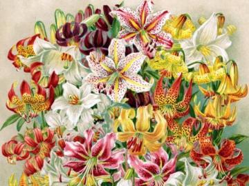 Bouquet de lis. - Fleurs. Un beau bouquet de lis.