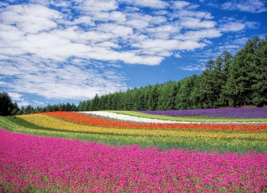 Virág mező - Színes virágok területén (11×10)