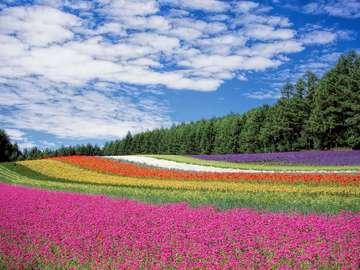 Champ de fleurs - Champ de fleurs multicolores.