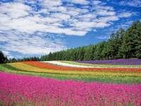 Πεδίο λουλουδιών