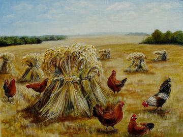 Rural landscape. - After the harvest. Rural landscape.