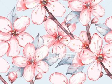 Sakura .. - ..............................