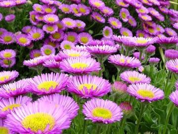 Marcinki. - Flores de Marcinki.Jesienne.
