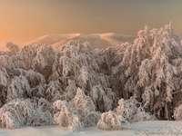 BIESZCZADY - paisaje de invierno Bieszczady