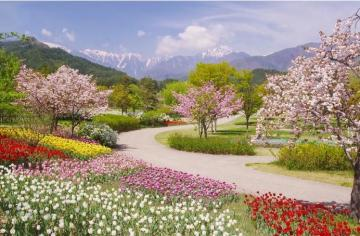 Spring in the Alps. - Flowers. Spring in the Alps. Landscape. Spring in the Alps. Spring in the Alps.
