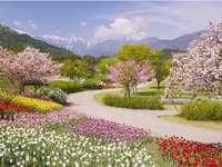 Printemps dans les Alpes. - Fleurs. Printemps dans les Alpes. Paysage. Printemps dans les Alpes. Printemps dans les Alpes.
