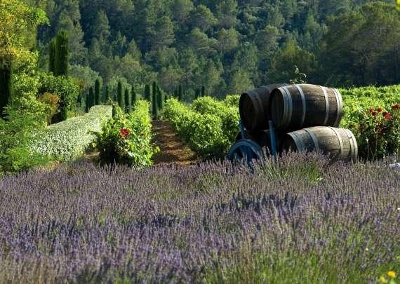 Egy mezőben Franciaországban - Fekvő. Egy mezőben Franciaországban (11×10)