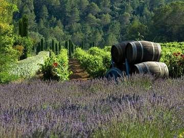 Sur le terrain en France - Paysage. Sur le terrain en France.