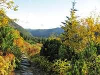 En el camino de la montaña - Paisaje. En el sendero de montaña.