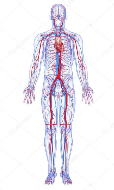 Circulatory system - Change the image composition