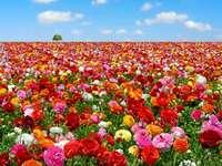 Bloem veld - <Mooi bloemenveld>