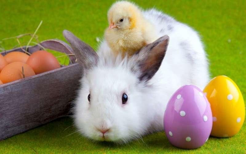 Puzzle Wielkanocne z Królikiem - Puzzle Wielkanocne z Królikiem do ułożenia