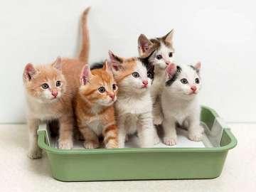 Drodzy kotki - Drodzy i słodcy kici kotki