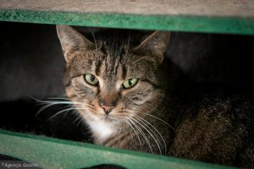 Pets - This is a picture of a cat that has beautiful green eyes and hid in a box.