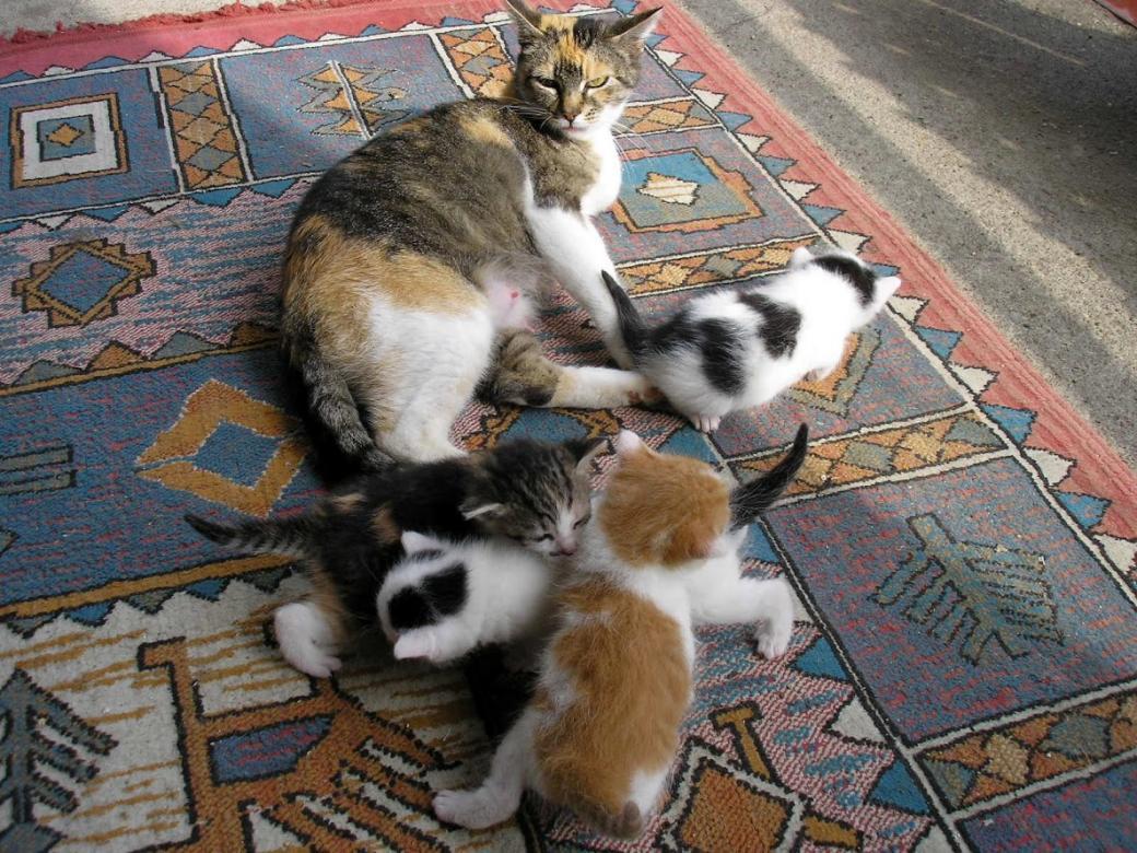 Het land is een familie - Kitty brengt haar nakomelingen groot (11×11)