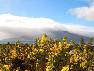 Scottish Isle of Skye. - Landscape. Scottish Isle of Skye.