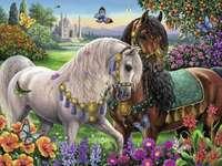 Belos cavalos.