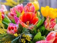 Kleurrijke tulpen - Lente kleurrijke tulpen