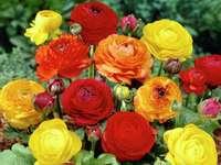 Schöne bunte Blumen.