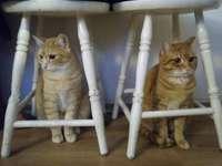 Een tweeling verbergen