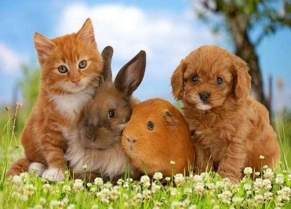 Dieren - Schattige kleintjes. Schattige dieren. Puzzel voor kinderen: peuters (10×9)