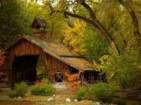 Zničená chata v lese.